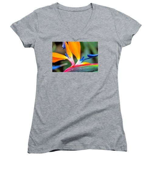Bird Of Paradise After The Rain Women's V-Neck
