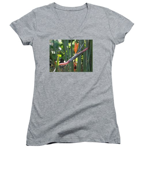 Bird Of Paradise Dripping Women's V-Neck
