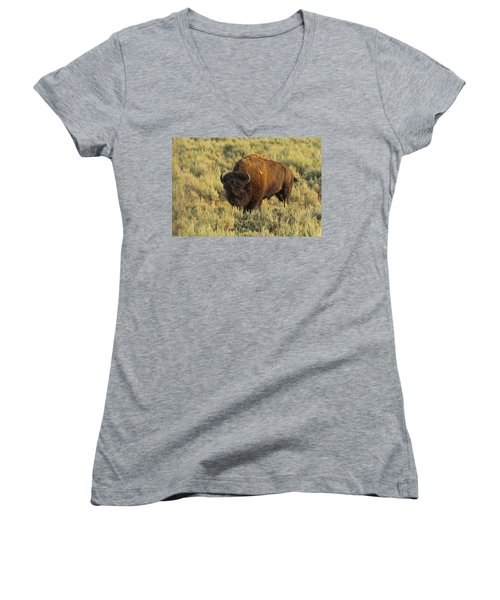 Bison Women's V-Neck T-Shirt (Junior Cut) by Sebastian Musial