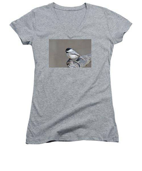 Black Capped Chickadee 1128 Women's V-Neck T-Shirt (Junior Cut) by Michael Peychich