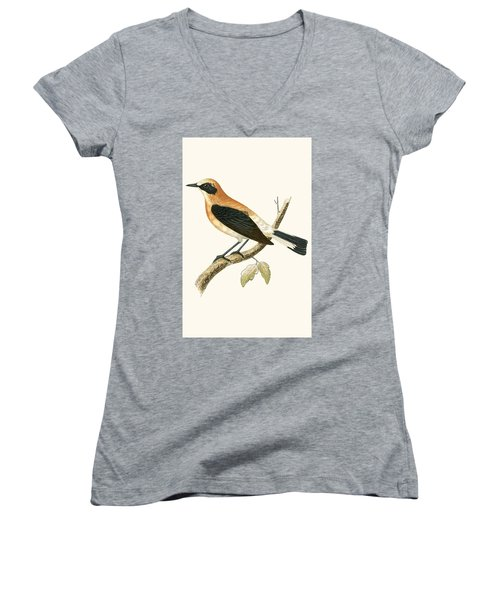 Black Eared Wheatear Women's V-Neck T-Shirt (Junior Cut) by English School