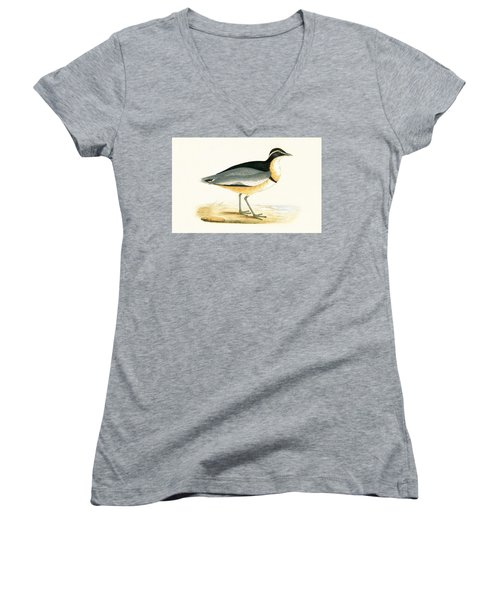 Black Headed Plover Women's V-Neck T-Shirt (Junior Cut) by English School