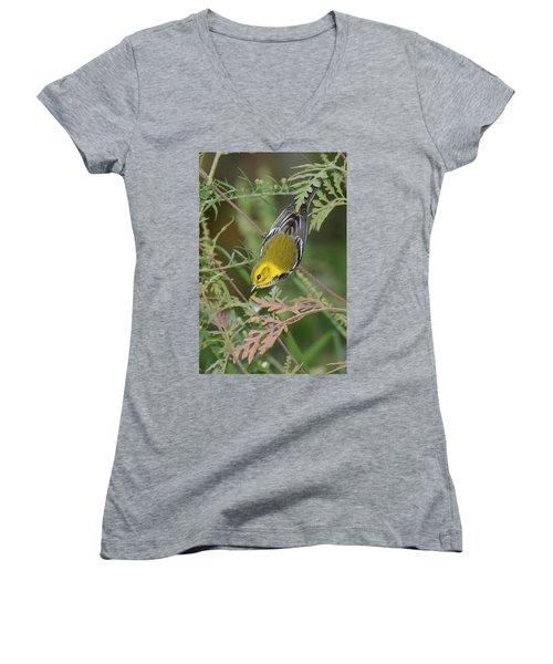 Black-throated Green Intent Women's V-Neck T-Shirt (Junior Cut) by Alan Lenk