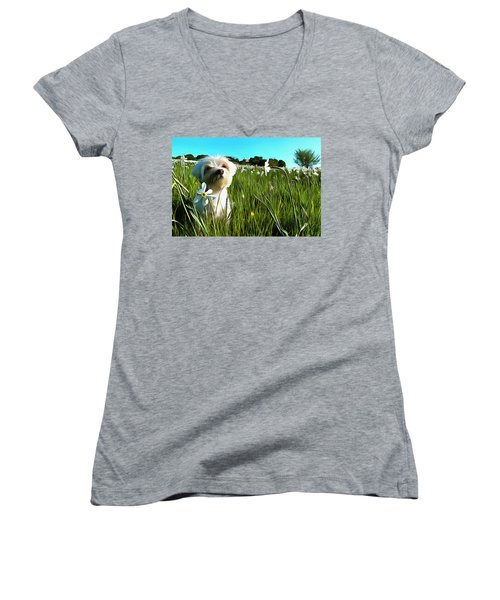 Blooming Daffodils In The Antola Park With Maltese I Paint Women's V-Neck