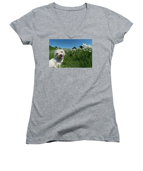 Blooming Daffodils In The Antola Park With Maltese II Women's V-Neck