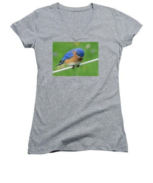 Blue Bird On Clothesline Women's V-Neck (Athletic Fit)