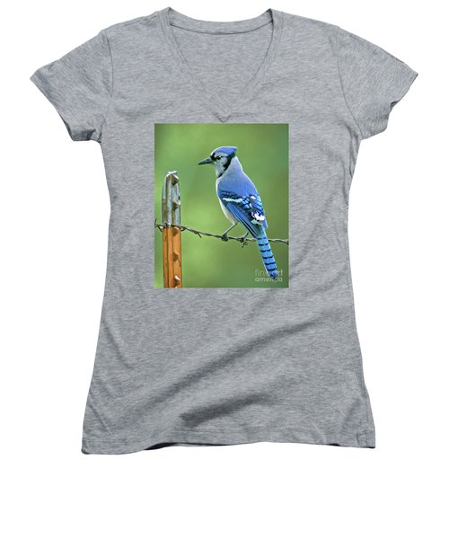 Blue Jay On The Fence Women's V-Neck (Athletic Fit)