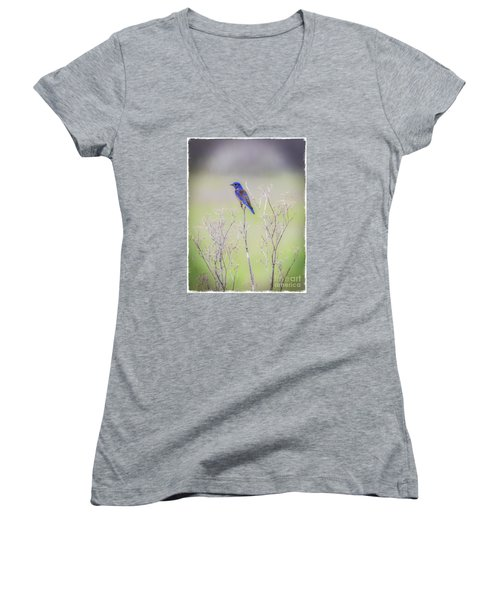 Bluebird On Hemlock Women's V-Neck T-Shirt (Junior Cut)