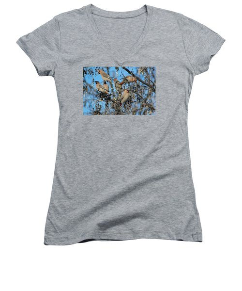 Women's V-Neck T-Shirt (Junior Cut) featuring the photograph Bohemian Waxwings by Kathy Bassett