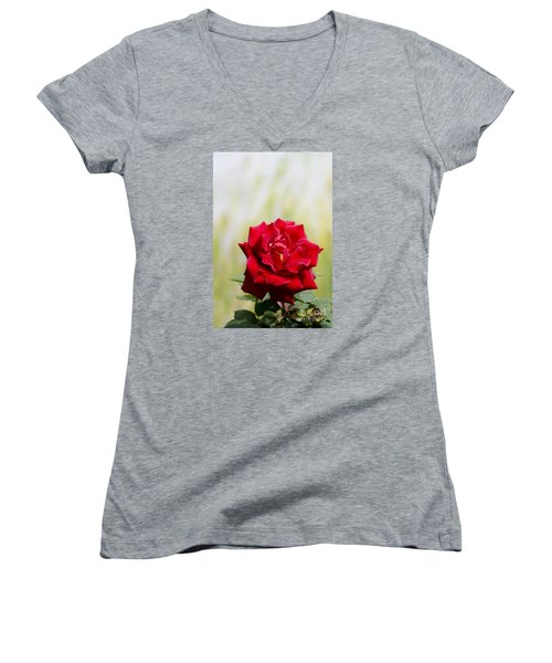Bright Red Rose Women's V-Neck T-Shirt (Junior Cut) by Perry Van Munster