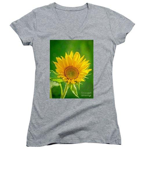 Bright Yellow Sunflower Women's V-Neck T-Shirt (Junior Cut) by Alana Ranney