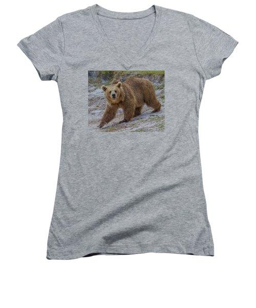 Brown Bear 3 Women's V-Neck