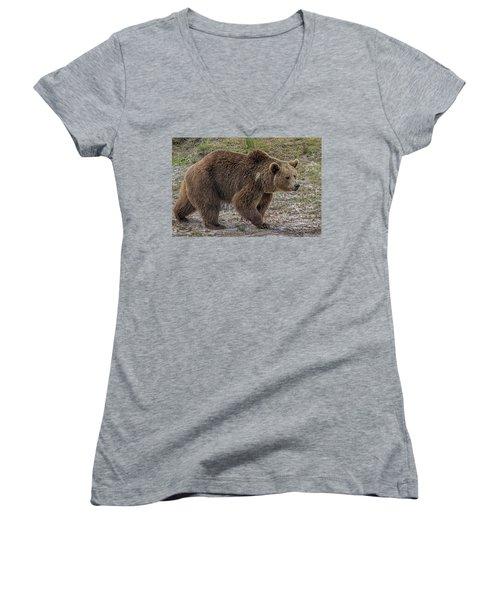 Brown Bear 6 Women's V-Neck