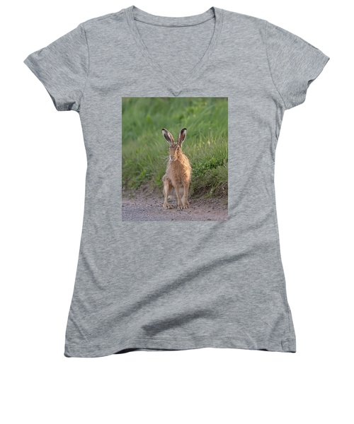 Brown Hare Sat On Track At Dawn Women's V-Neck