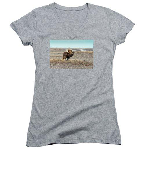 Bull Musk Ox Women's V-Neck T-Shirt (Junior Cut) by Anthony Jones