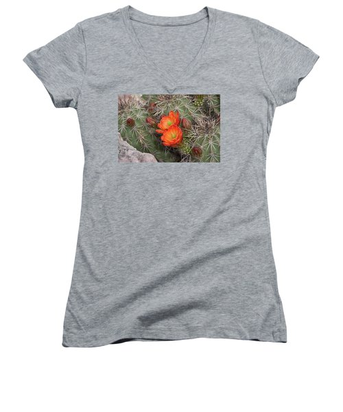 Cactus Blossoms Women's V-Neck T-Shirt
