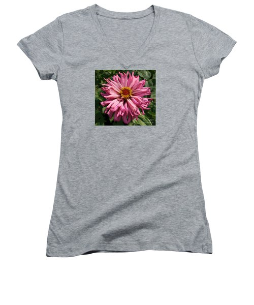 Women's V-Neck T-Shirt (Junior Cut) featuring the photograph Cactus Petal Zinnia by Jeanette French