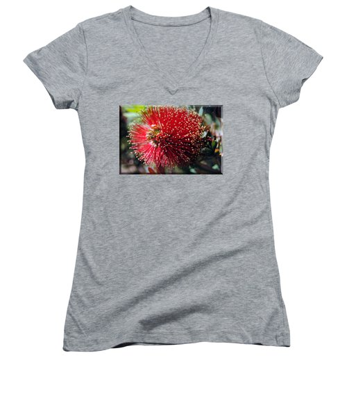Callistemon - Bottle Brush T-shirt 5 Women's V-Neck T-Shirt