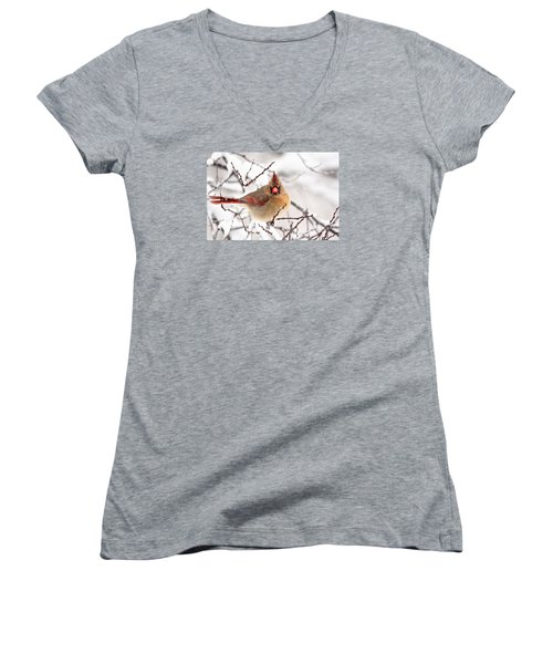 Women's V-Neck T-Shirt (Junior Cut) featuring the photograph Cardinal Beauty by Trina Ansel