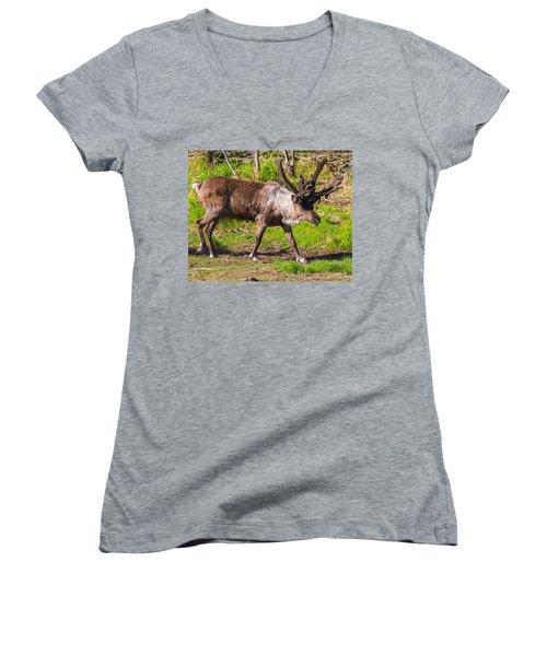Caribou Antlers In Velvet Women's V-Neck T-Shirt (Junior Cut) by Allan Levin