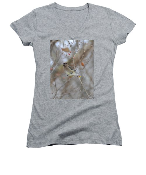 Cedar Wax Wing 2 Women's V-Neck T-Shirt (Junior Cut) by David Arment