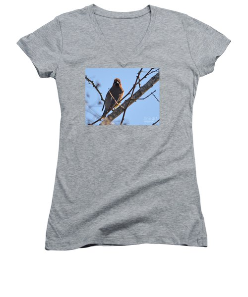 Cedar Wax Wing On The Lookout Women's V-Neck T-Shirt (Junior Cut) by Barbara Dalton