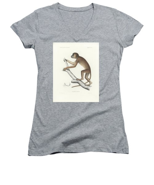 Central Yellow Baboon, Papio C. Cynocephalus Women's V-Neck (Athletic Fit)