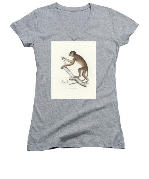 Central Yellow Baboon, Papio C. Cynocephalus Women's V-Neck T-Shirt