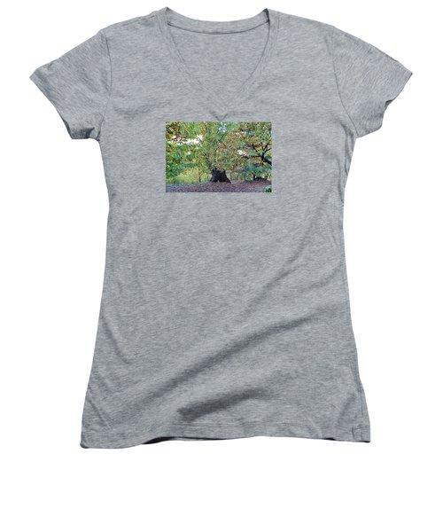 Chestnut Tree In Autumn Women's V-Neck T-Shirt (Junior Cut) by Goyo Ambrosio