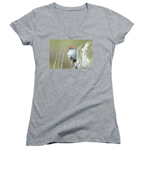 Women's V-Neck T-Shirt (Junior Cut) featuring the photograph Chipping Sparrow by Mike Dawson