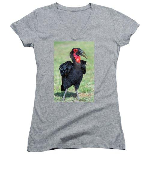 Close-up Of Ground Hornbill Bucorvidae Women's V-Neck T-Shirt