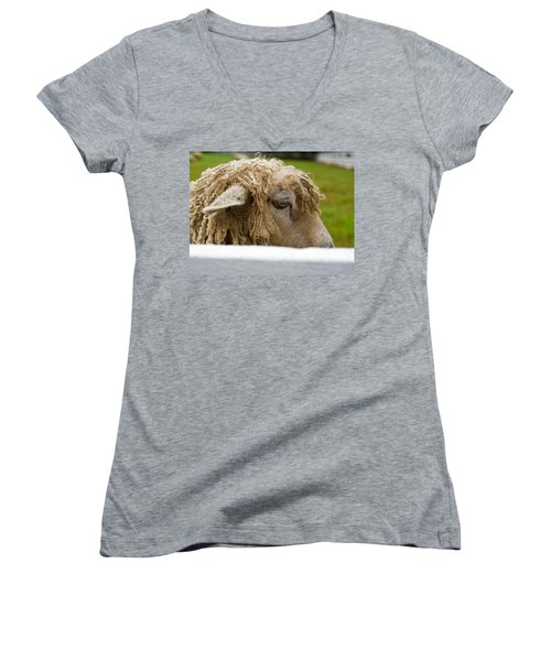 Close-up Of Leicester Longwool Women's V-Neck T-Shirt