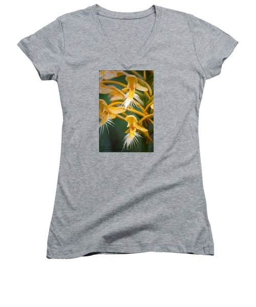 Close-up Of Yellow Fringed Orchid Women's V-Neck T-Shirt