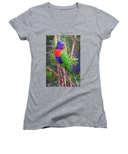 Colorful Parakeet Women's V-Neck T-Shirt