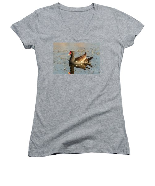 Common Gallinule Women's V-Neck T-Shirt (Junior Cut) by Robert Frederick