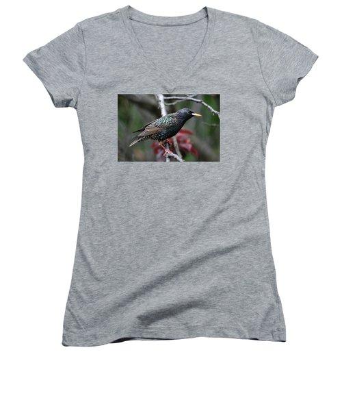 Common Starling Women's V-Neck T-Shirt (Junior Cut) by Trina Ansel