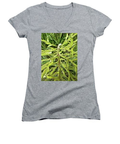 Compass Plant Women's V-Neck T-Shirt (Junior Cut) by Tim Good