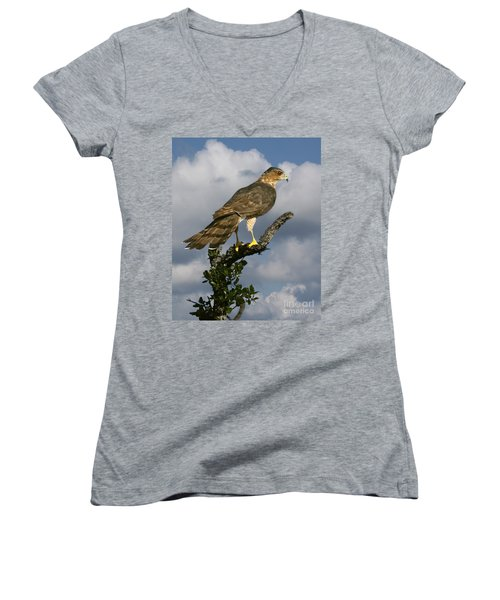 Cooper's Hawk On Watch Women's V-Neck (Athletic Fit)