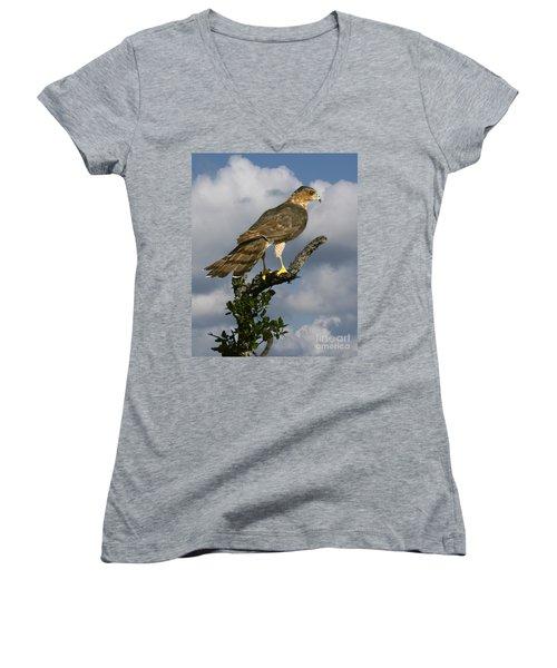 Cooper's Hawk On Watch Women's V-Neck T-Shirt