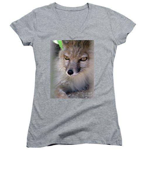 Women's V-Neck T-Shirt featuring the photograph Corsac Fox- Vulpes Corsac 03 by Ausra Huntington nee Paulauskaite