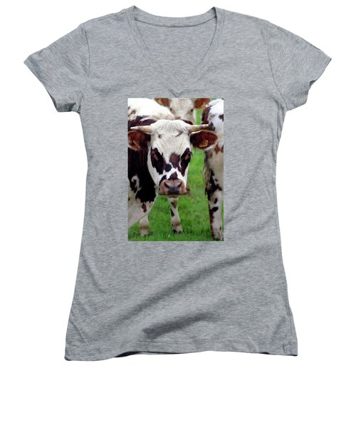 Cow Closeup Women's V-Neck