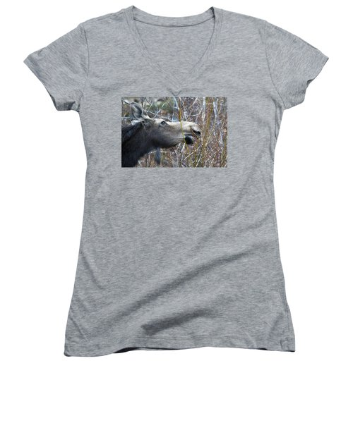 Cow Moose Dining On Willow Women's V-Neck