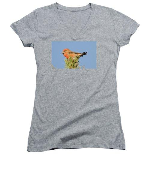Crossbill Women's V-Neck T-Shirt (Junior Cut) by Judd Nathan
