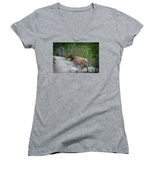Crossing Paths With An Elk Women's V-Neck (Athletic Fit)