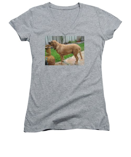 Cujo Getting A Scent Women's V-Neck T-Shirt (Junior Cut) by Val Oconnor
