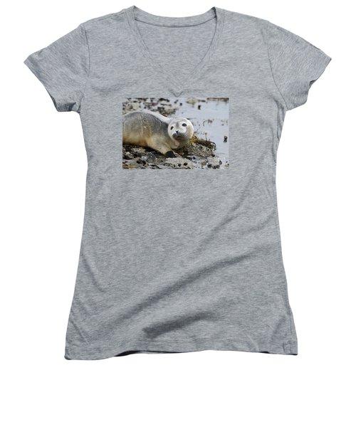 Curious Harbor Seal Pup Women's V-Neck T-Shirt (Junior Cut) by DejaVu Designs