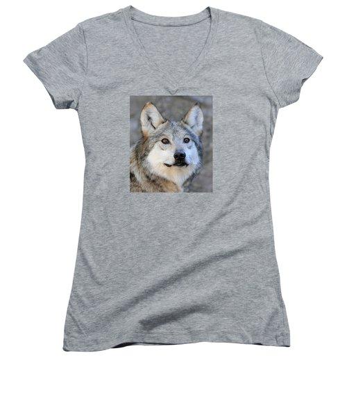 Curious Wolf Women's V-Neck T-Shirt (Junior Cut) by Elaine Malott