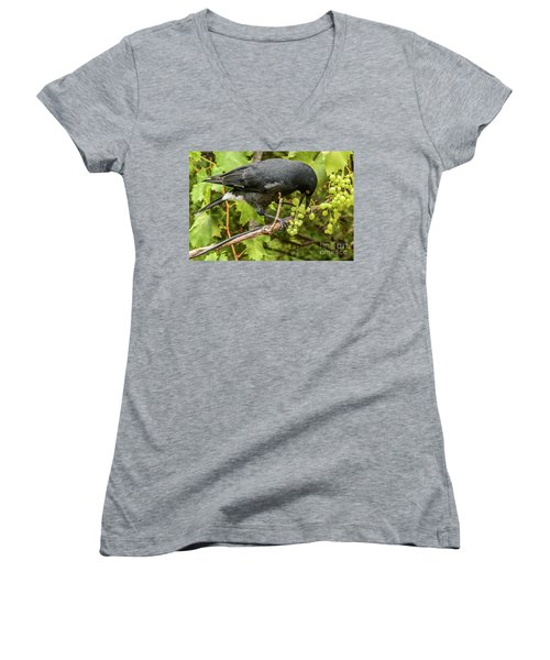 Currawong On A Vine Women's V-Neck T-Shirt