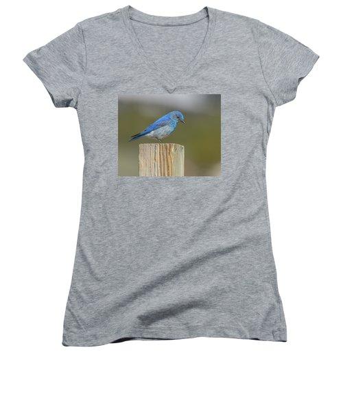 Daddy Bluebird Guarding Nest Women's V-Neck (Athletic Fit)