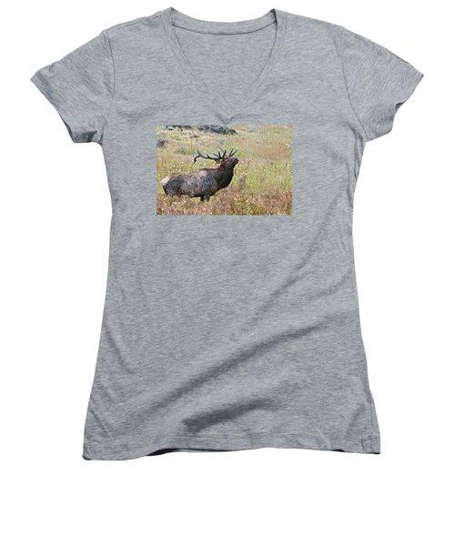 Women's V-Neck T-Shirt featuring the photograph Dapper Dan by Gary Lengyel